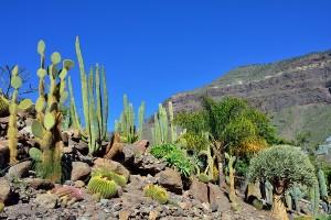 cactus garden, pool landscaping