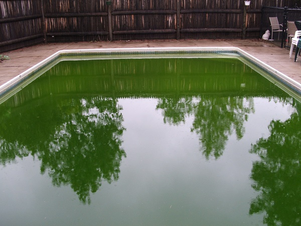 Get the green out of your swimming pool